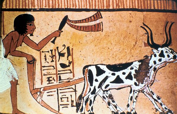 Depiction of ancient Egyptian ploughing methods.