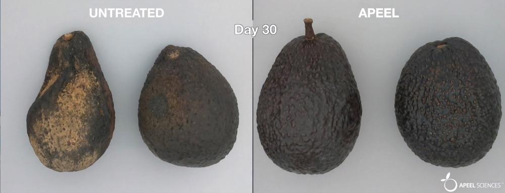 untreated avacado vs apeel